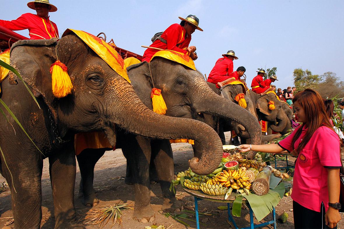 13 марта - День тайского слона!